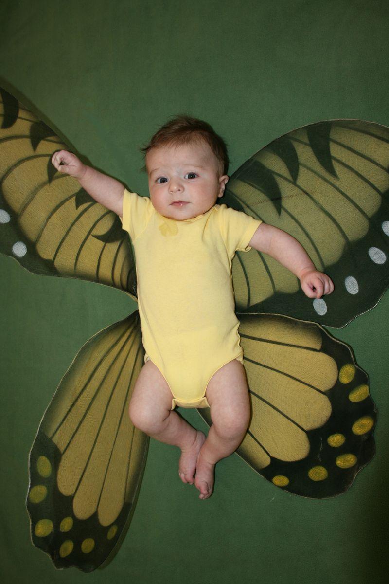 Butterflyb