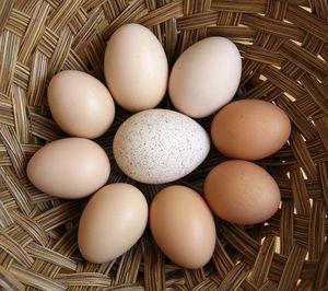 EggRing